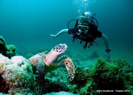 Octopus divers