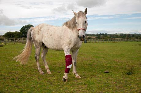 Top 5 nejlepších kuriozit s koňmi!