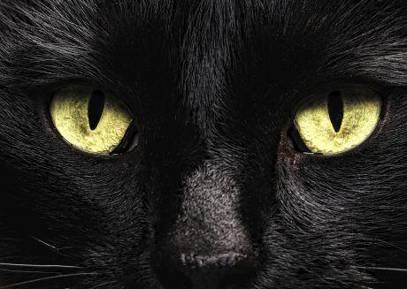 černá sval ženy kočička učitelé porno se studenty