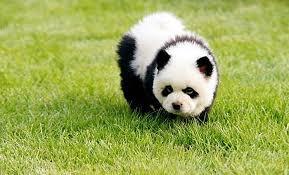 Pandapes