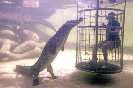 krokod�l