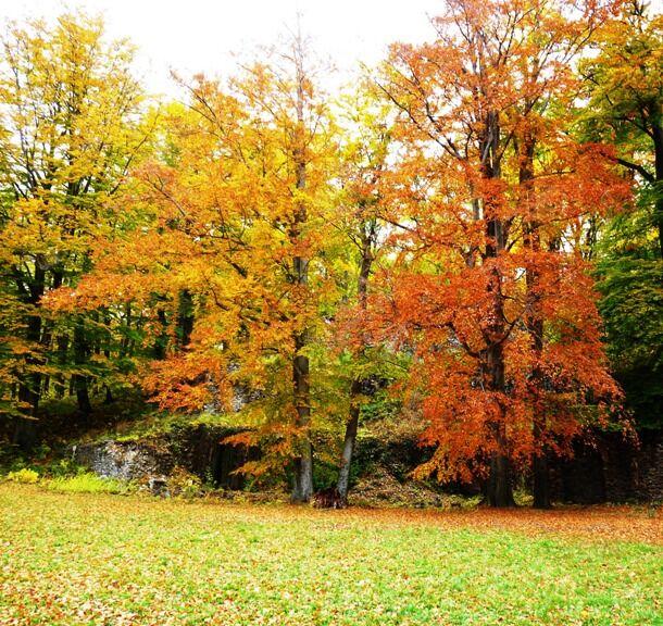 d92c0bfdadc ŽENA-IN - Také milujete podzim