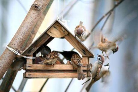 Velké ptáky ven
