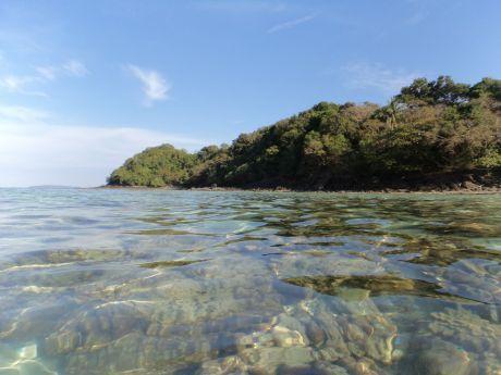 koral3
