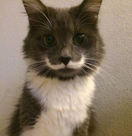 kočka s knírkem