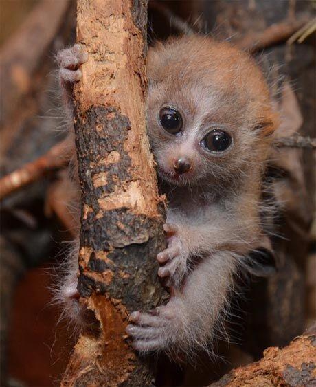 Zoo Děčín hlásí první letošní přírůstek. A jak je roztomilý!