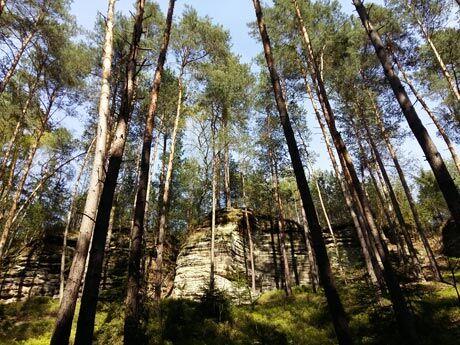 Ukážem vám cestu rájem: Pěší výlet z Příhraz na hrad Kost a zpět!