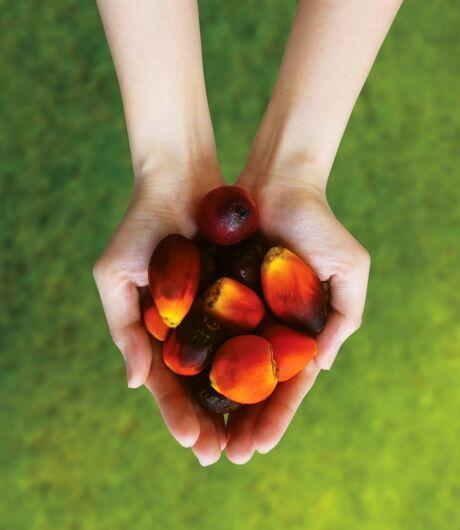 palms oil