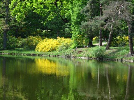 Průhonice – procházka po rozkvetlém parku vám zvedne náladu a pohladí po duši