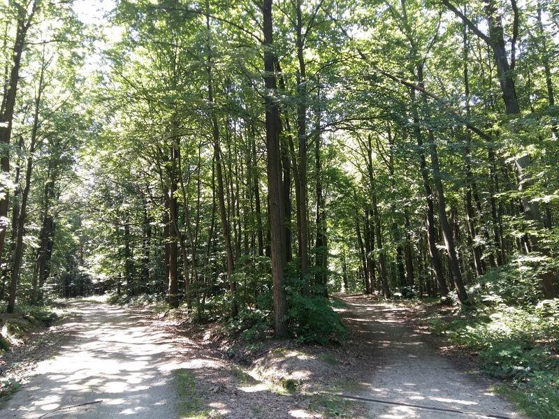 Užijte si klid v přírodě cestou na Nový Hrádek u Lukova