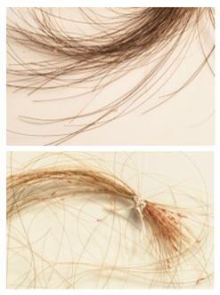 vlasy a vsi