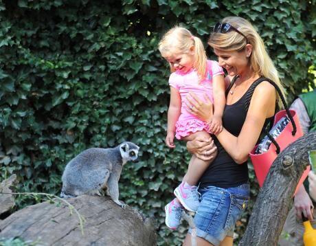 s lemurem