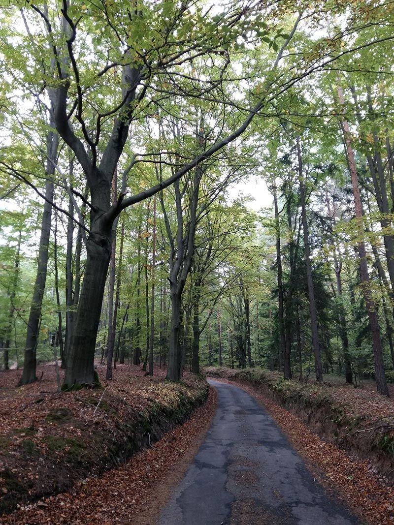 Kokořínskem nahoru a dolu: Další tip na výlet i do chladnějšího podzimu
