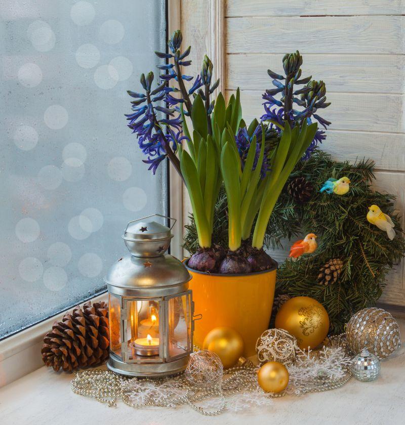 Hyacint vánoční dekorace