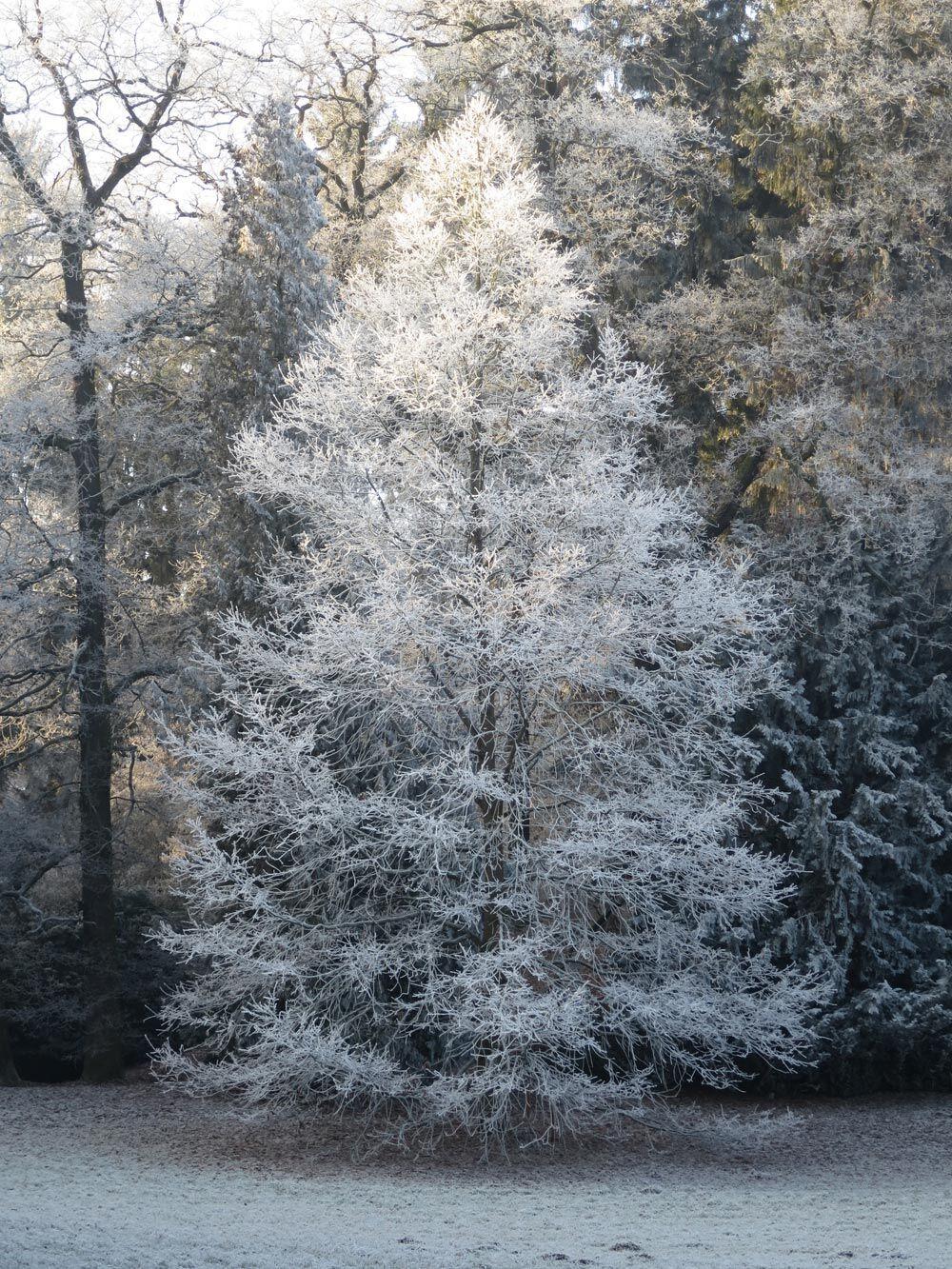 Užijte si s námi mrazivé království v Průhonickém parku