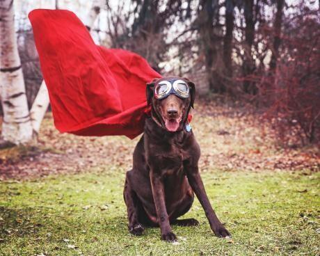pes hrdina