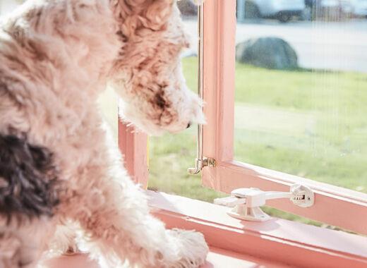Pes se snaží otevřít okno s bezpečnostním uzávěrem.