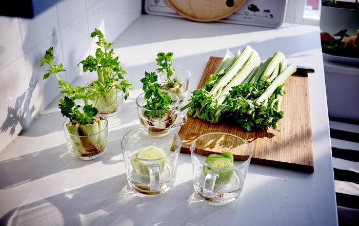 Bulva řapíkatého celeru ve sklenici s vodou