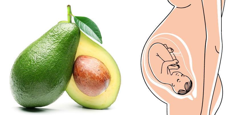 děloha