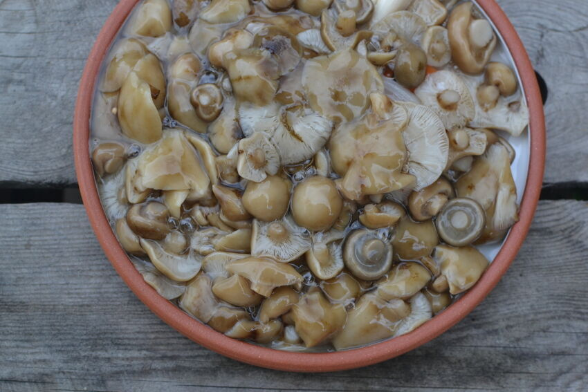 houby s octem