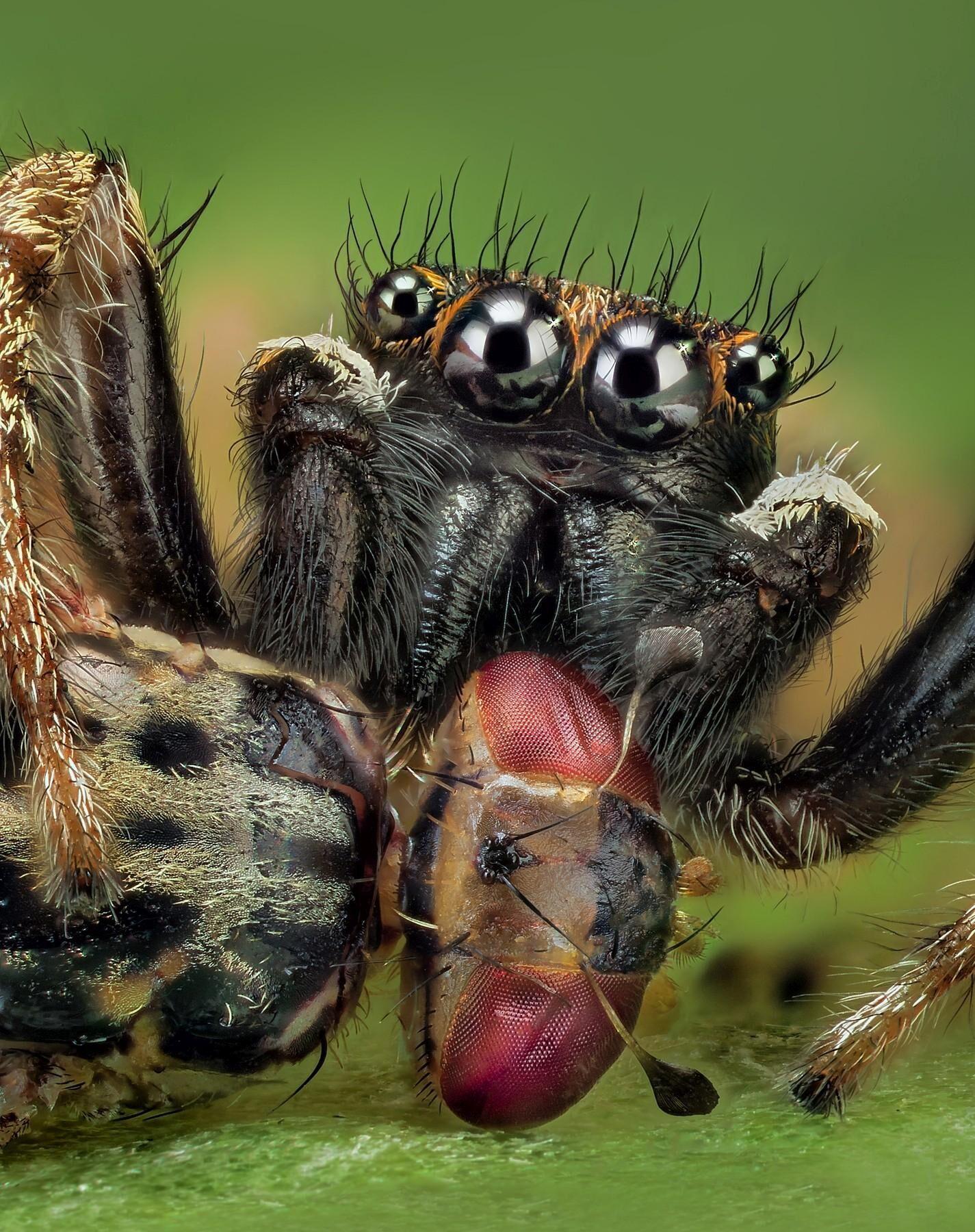 pavouks