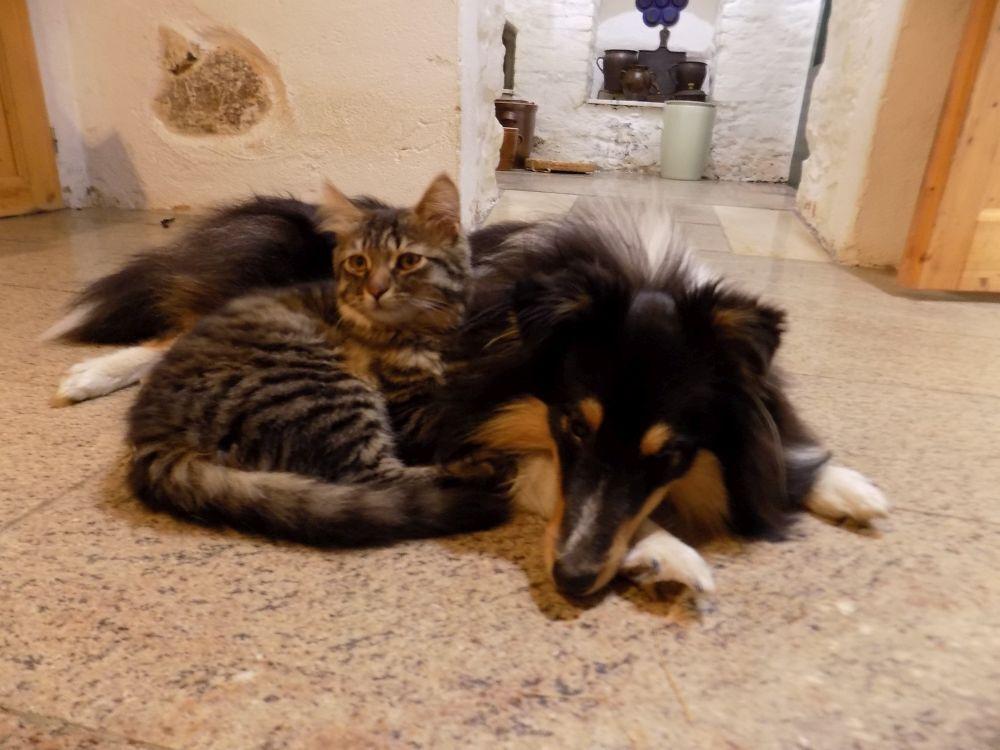 velké ženy s velkou kočičkou
