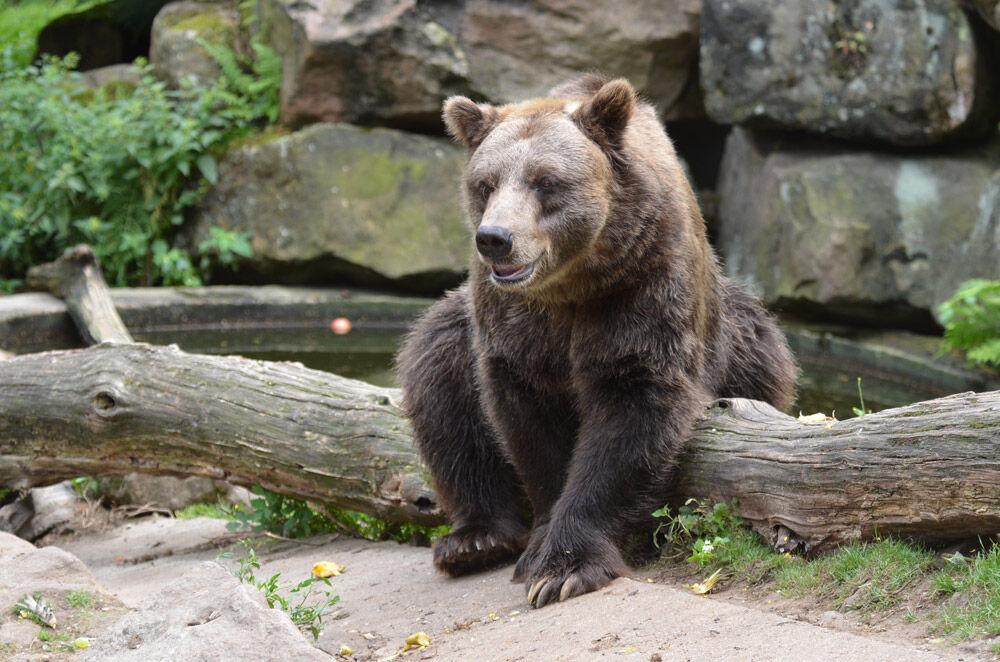 ZOO Děčín - medvěd hnědý grizzly
