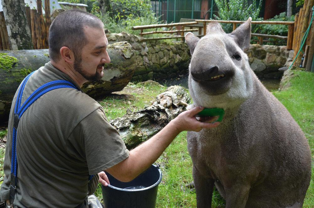 ZOO Děčín - tapír