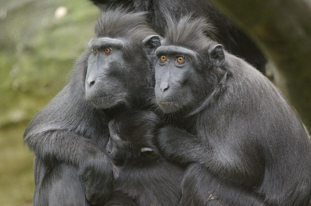 Proč navštívit s dětmi Zoo Děčín