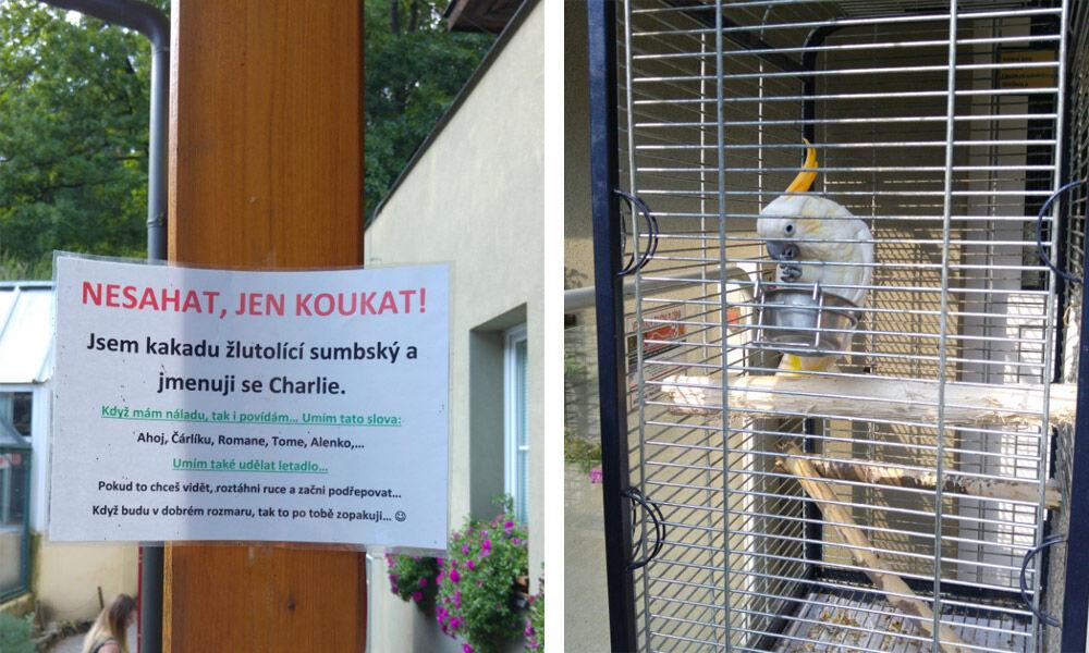 Mluvící papoušek v Zoo Děčín