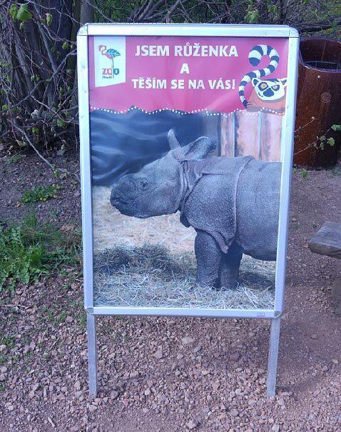 Proč navštívit Zoo Plzeň