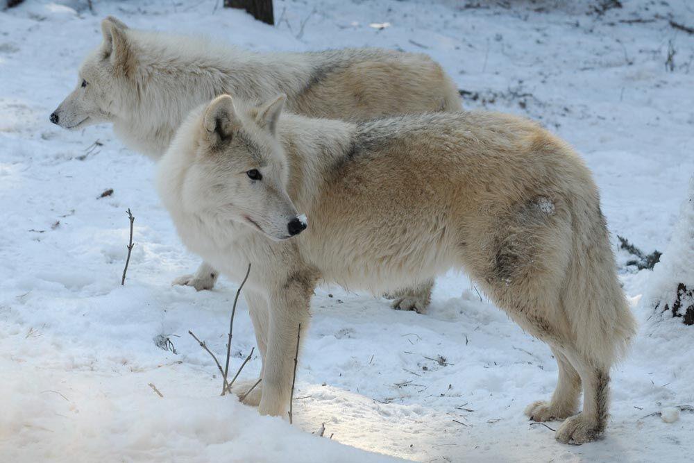 jak sníh sluší Zoo Olomouc