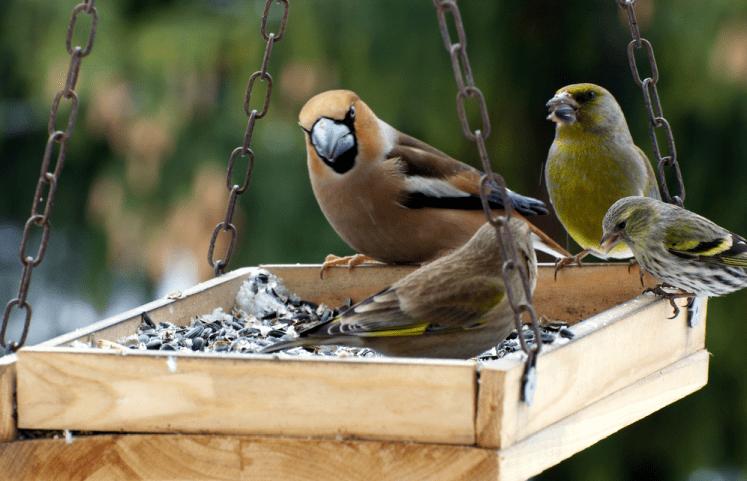 nadměrné ptáky
