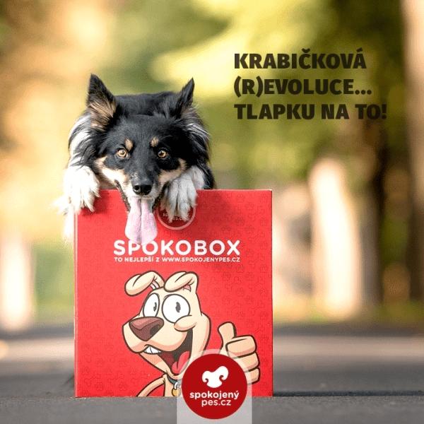 7e7943c9170 ŽENA-IN - Vyhrajte 2x SPOKOBOX - box plný překvapení pro kočky a psy