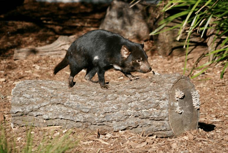milovníky zvířat z Austrálie jak zapojíte dvojitý vypínač světla