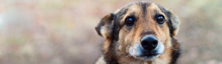 dogpoint.jpg