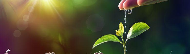 rostliny.jpg