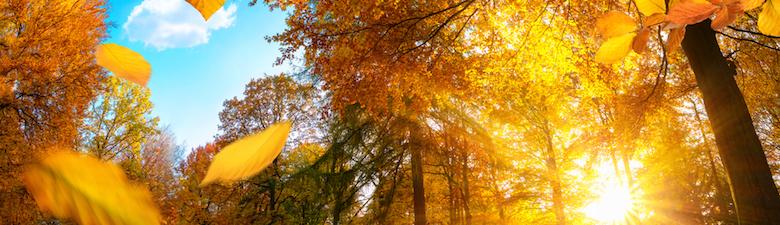 podzim-velka.jpg