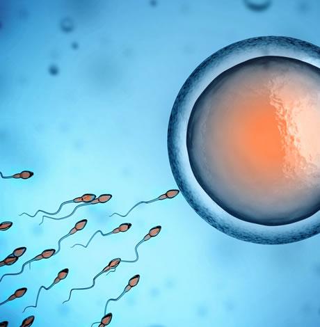sperm2.jpg