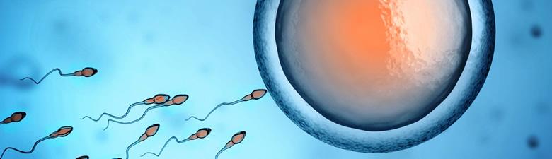 sperm3.jpg